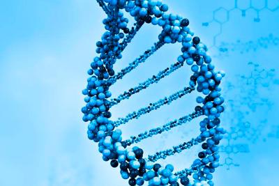 Секрет долголетия в гене увеличивающем продолжительность жизни