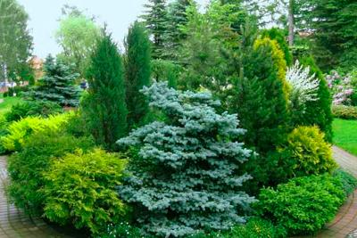 Неприхотливые растения на участке пожилых людей